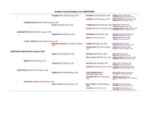 Xanthuss pedigree_1